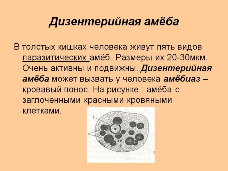 Хромомикоз фото